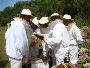 Descobrirem el món de l'apicultura