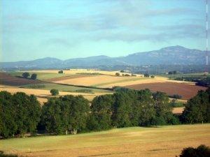 Una imatge del parc agrari de Gallecs