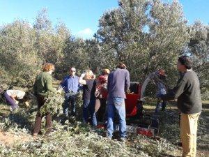 Els voluntaris/es triturant les branques