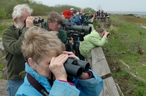 Port Townsend residents Paul and Janet Isherwood  (l-r) join over 100 bird-watchers on the Grays Harbor National Wildlife Refuge boardwalk Friday, the first day of the 13th annual Grays Harbor Shorebird Festival.Steve Bloom/The Olympian